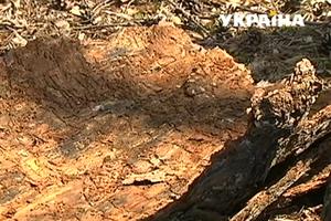 В Украине массово гибнут деревья: в лесничествах заговорили об экологической катастрофе