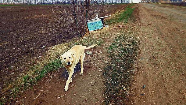 Трогательная история: украинский Хатико ждет хозяина, который оставил его в поле