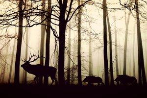 Половина видов животных и растений просто вымрут - ученые