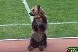 Пленник и слуга футбола: зоозащитники прокомментировали вопиющий случай с медведем в России