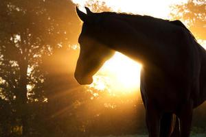 Во Львовской области начали разводить лошадей-тарпанов