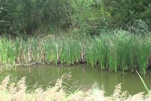 В Житомирской области нашли мертвой двухлетнюю девочку