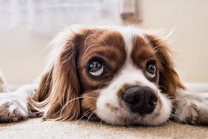 На китаянку с неба упала собака: появилась запись