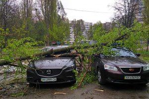 В Харькове огромное дерево раздавило три машины