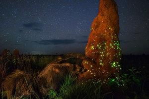 На конкурсе снимков дикой природы победило фото чучела муравьеда