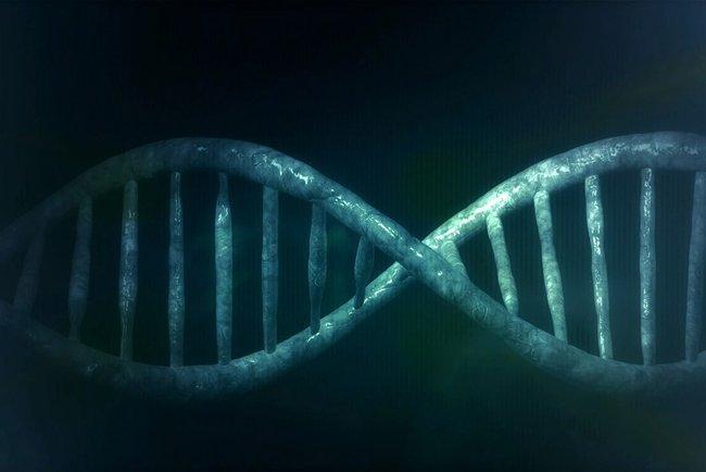 Биологи освоили редактирование генов крови для переливания