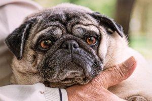 Рада планирует усложнить жизнь владельцам домашних животных