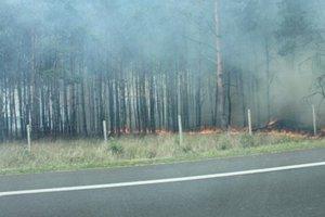 В Словакии бушует разрушительный лесной пожар