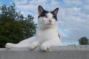Итальянский кот стал миллионером