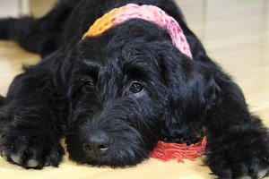 Клиент добился от Amazon возвращения своей собаки, похищенной курьером