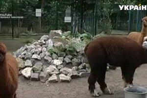 В Николаевском зоопарке собаки загрызли четверых питомцев