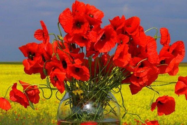 С Днем Победы и памяти!  70_ls.1525776013