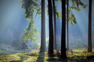 Россиянин услышал в лесу страшные звуки: появилось видео