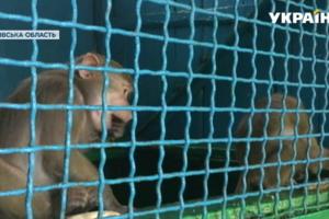 В Менском зоопарке произошел небывалый бэби-бум