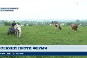 В селе на Буковине нашли птичий могильник