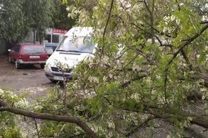 Разгул стихии: ветер повалил деревья в Киеве и области