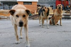 В Бердянске стая бродячих собак набросилась на женщину с ребенком
