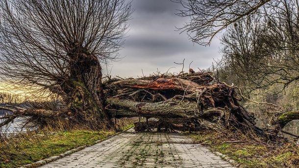 ВЧеркассах нашкольников рухнуло дерево, есть пострадавшие