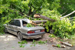 В Одессе дерево раздавило три машины