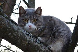 Видеошок: в Днепре спасатели смыли с дерева застрявшего кота
