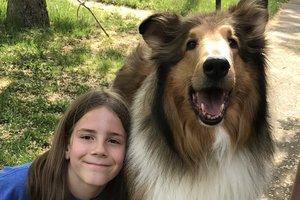 В США мальчик прославился перегладив сотни собак