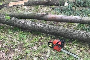 В Броварах задержали вора кабеля и мужчину, который вырубал деревья