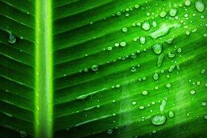 Кота Шредингера обнаружили внутри листьев растений