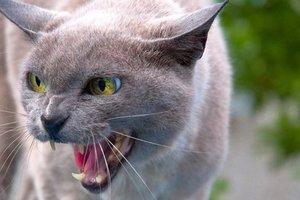 В Харьковской области жертвами бешеных животных стали почти сто человек