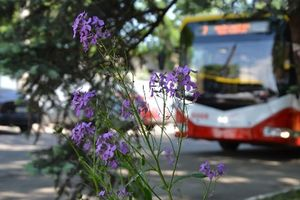 Одесса получила шесть новых троллейбусов из Беларуси