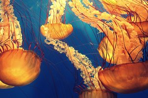 В Европе набирают популярность чипсы из медуз