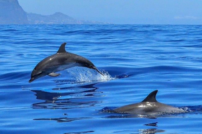 ВТаиланде дельфин скончался , проглотив 80 пластиковых пакетов