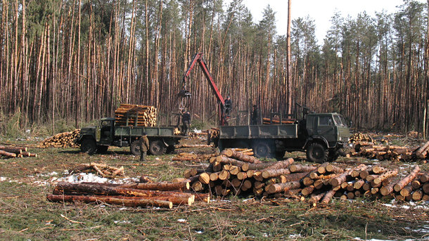 Кто уничтожает украинские леса