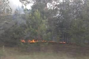 В Чернобыле горит Рыжий лес: синоптик предупреждает киевлян об опасности