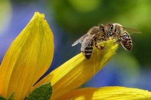 Разнообразие насекомых обеспокоило правительство Германии