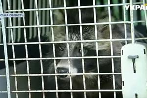 В Киевской области в сарае без воды и еды нашли экзотическое животное
