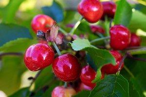 Лайфхак: как легко почистить ягоды от мусора и листьев