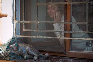 В Одессе похитили кота Жванецкого