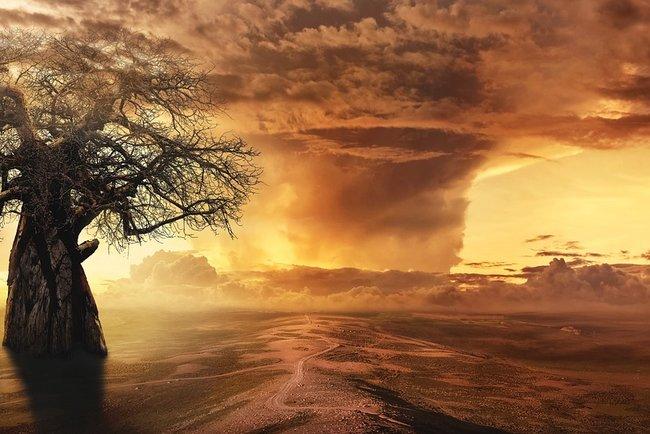 ВАфрике умирают самые старые баобабы: экологи винят глобальное потепление