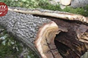 В Киеве во время грозы ветка дерева убила женщину