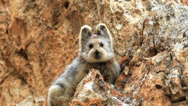 В КНР попал навидео неповторимый «волшебный кролик»