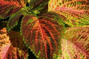 Ученые нашли частицы золота в обычных растениях