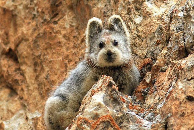 В КНР впервый раз попал навидео неповторимый «волшебный кролик»