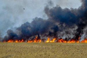 В Запорожской области за сутки сгорело 38 гектаров природных угодий