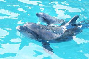 Видеошок: в дельфинарии Одессы на глазах у зрителей шоу родился дельфиненок