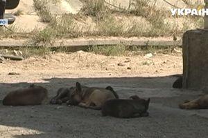 В Днепре возле медучреждения на женщину набросилась стая собак