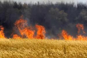 В Запорожской области пожар уничтожил почти 100 га пшеничного поля