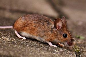 Мыши пробрались в банкомат и съели больше миллиона: появилось фото