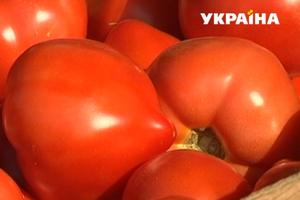 Помидорный бум: в Украине упали цены на томаты