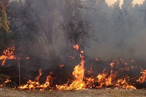 В Запорожской области потушили десятки пожаров в степи: опубликовано видео