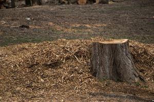 Остались одни пеньки: в Крыму массово вырубают деревья